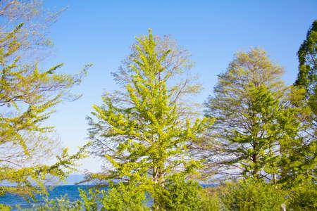 lakeside: Lake Biwa lakeside