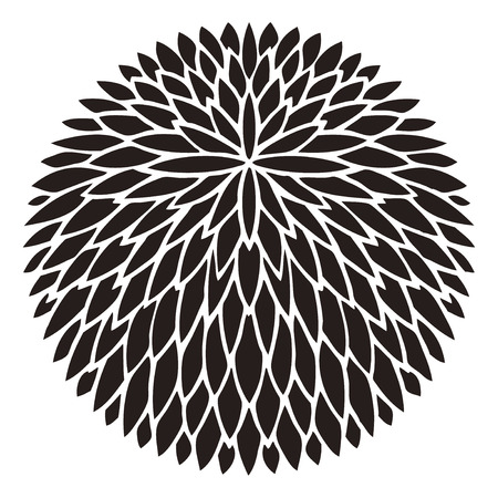 thousand: Thousand double chrysanthemum Sene chrysanthemum