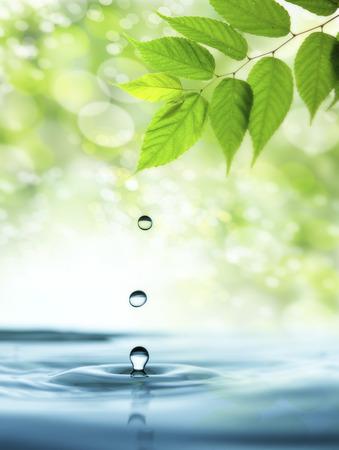 新鮮な緑と水