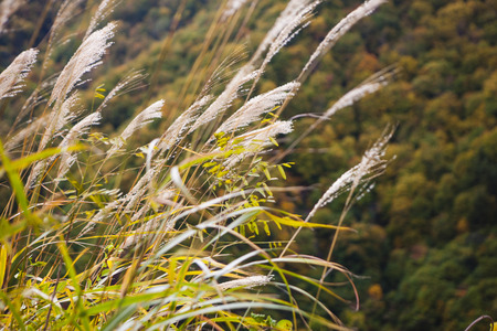 diluted: Pampas grass and foliage and mountains Stock Photo