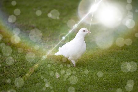 paloma blanca: Blanca paloma