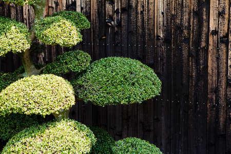 horticulture: Garden tree Stock Photo