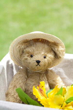 straw the hat: Teddy bear wearing a straw hat