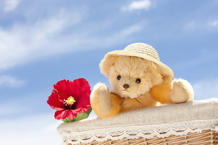 Teddy Bear and hibiscus