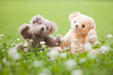 frolic: Two dogs of teddy bear that frolic in the fields