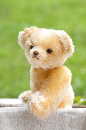 Teddy bear baby Stock fotó