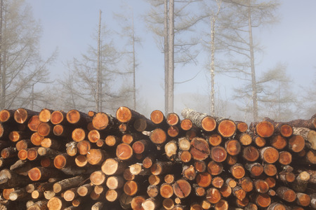 thinning: and thinning has been timber