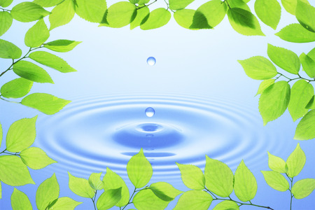 young leaves: Water droplets and young leaves