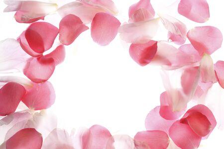 It rose petals frame Standard-Bild