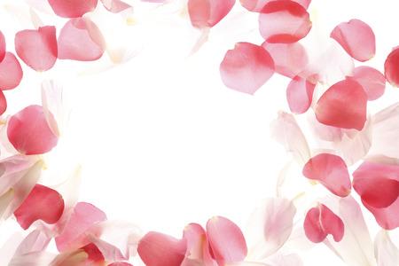 It rose petals frame Stock Photo