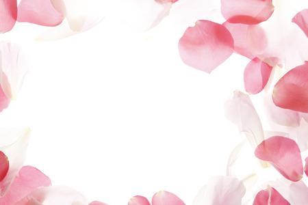 rosas blancas: P?talos de Rosa