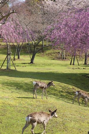 nara: NARA Park and deer