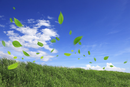 Leaves that fall seeded in grassland