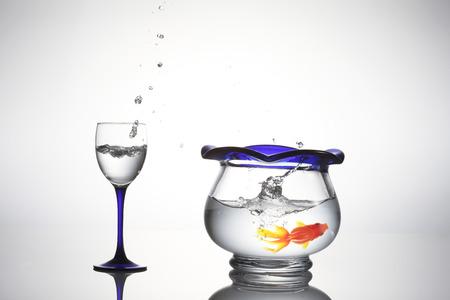 bounce: Goldfish bounce