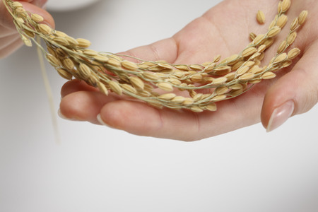 cereals holding hands: Hands of women with rice Stock Photo