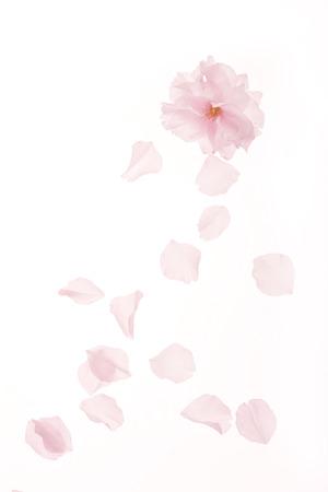 Blossom Stock fotó