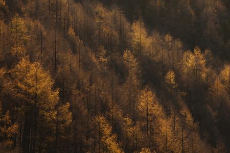 Autumn trees from Kushigatayama