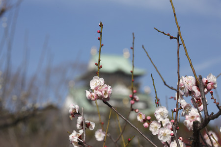 osaka castle: Osaka Castle plum Stock Photo