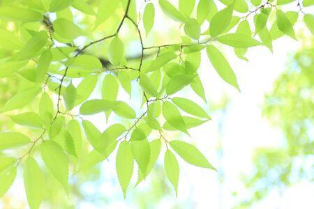 Frische grüne Bäume