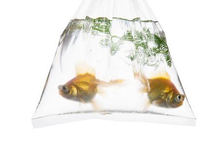 coolness: Bag of Goldfish