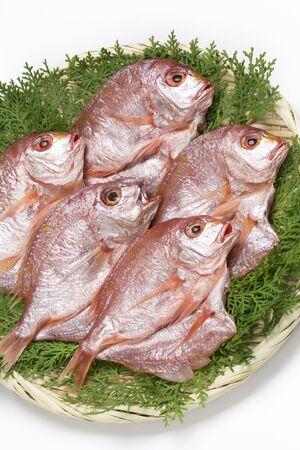 dried fish: Renkodai of dried fish
