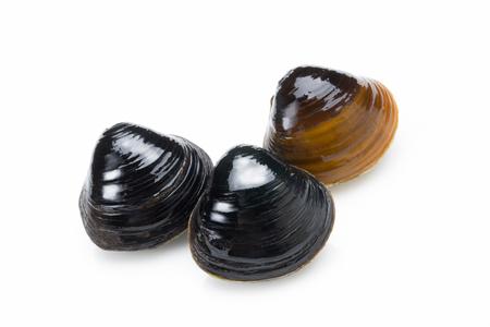 freshwater: Daiwa freshwater clam