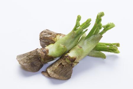 Bud kabeljauw voorjaar wilde planten Stockfoto