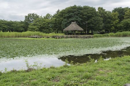 the historical: Pond of Hachimanpara Historical Park