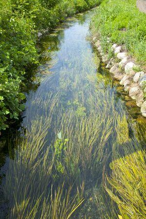 waterweed: Azumino melting snow water and aquatic plants Stock Photo