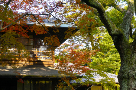 Private house with autumn leaves