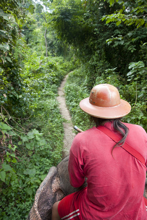 foreigner: Elephant Trekking Stock Photo