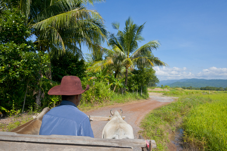 cart road: Ox cart to pull the country road Stock Photo