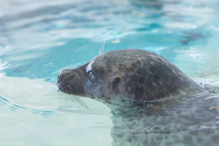 ringed: Show up Ringed Seal
