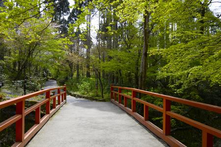 footway: Bridge and fresh green