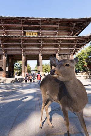 cultural artifacts: Todai-ji Temple Namdaemun and deer Editorial