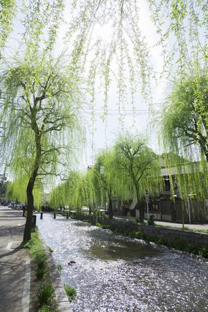 shirakawa: Shirakawa and willow