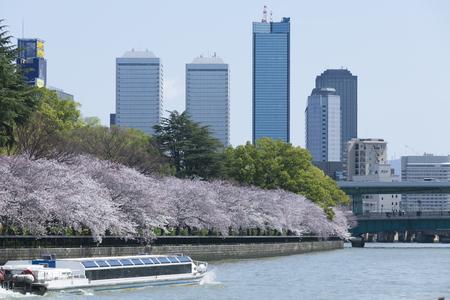 waterbus: Cherry trees of Okawa and water-bus Stock Photo