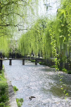 ascetic: Shirakawa and willow