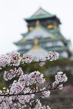 osaka castle: Osaka Castle and cherry