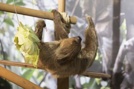 sloth: Vago Foto de archivo
