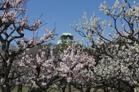 osaka castle: Osaka Castle and plum Grove