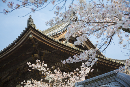 deity: Ninna-ji Temple Nio guardian deity gate and cherry
