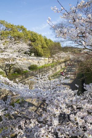 to incline: Keage incline cherry blossoms Stock Photo