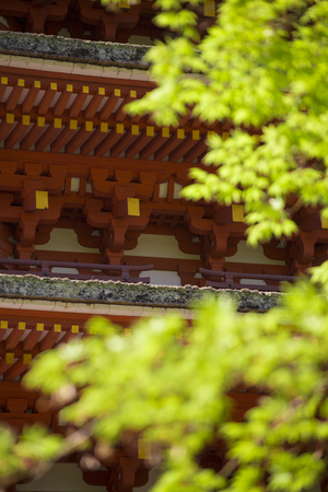 hase: Hase of the five-story pagoda and the fresh green