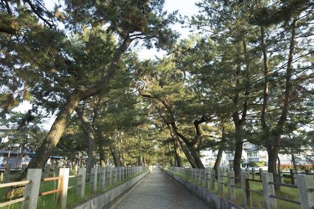 an approach: Approach of Horyuji