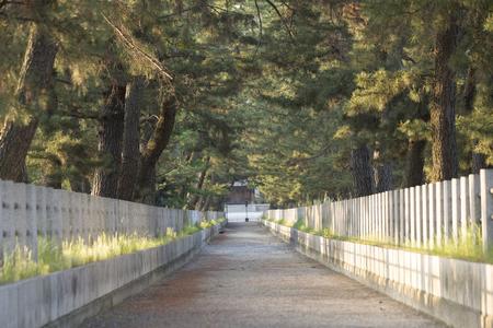straight path: Approach of Horyuji