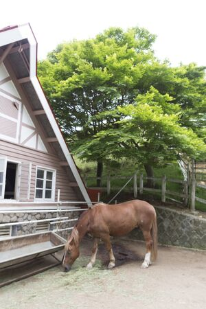 chacra: rancho de caballos