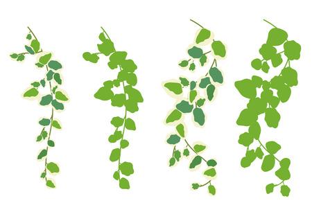 Houseplants: decoration - Pumira