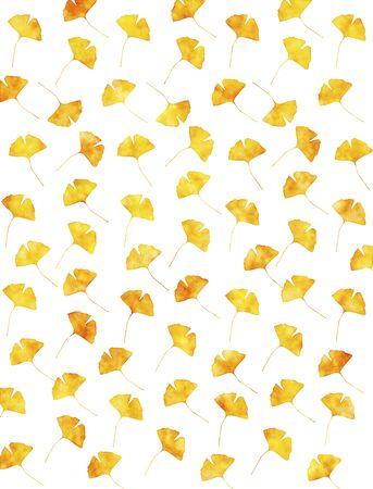 ginkgo: Ginkgo - background