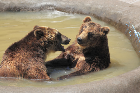 Two bears